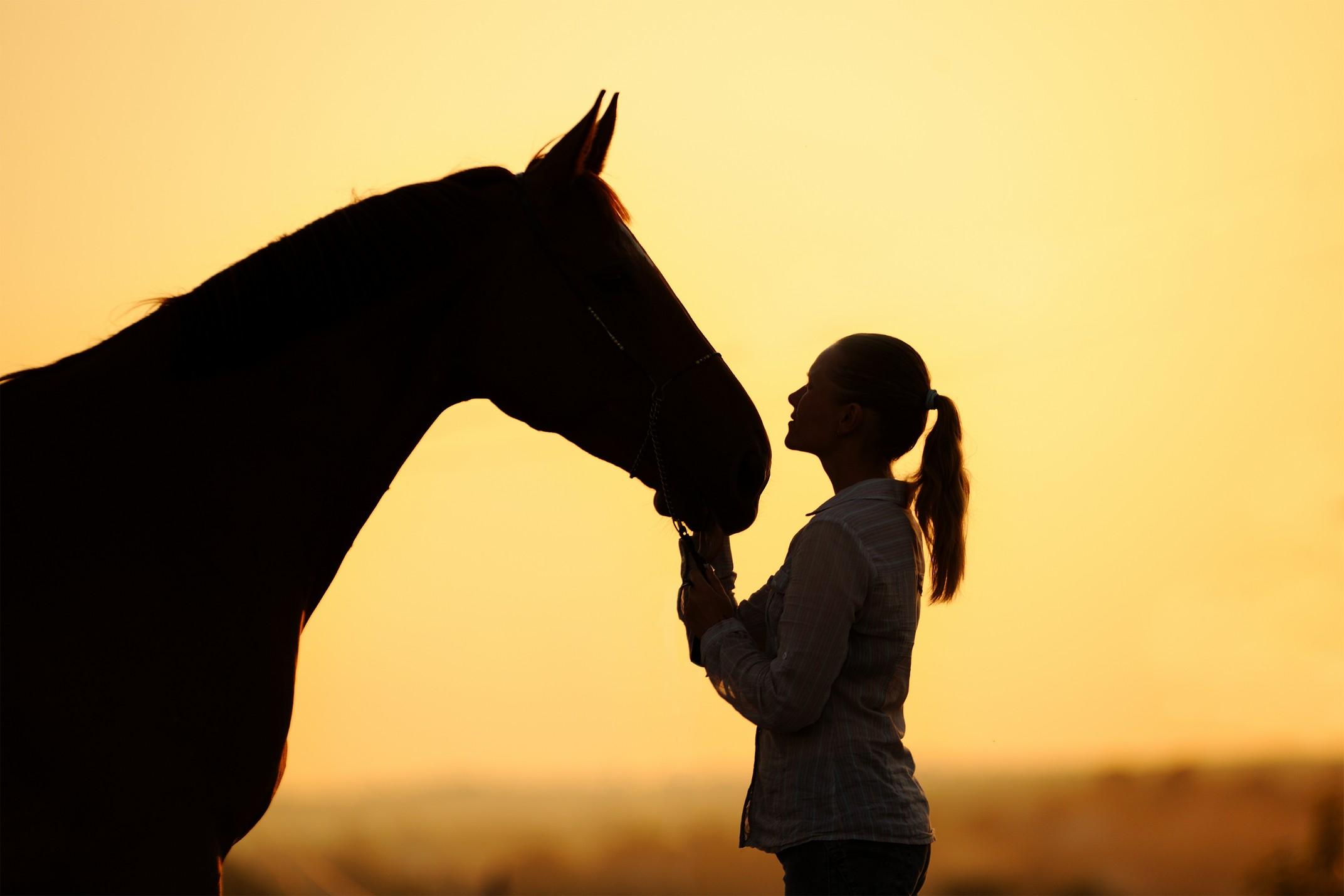equine services Jackson, MO